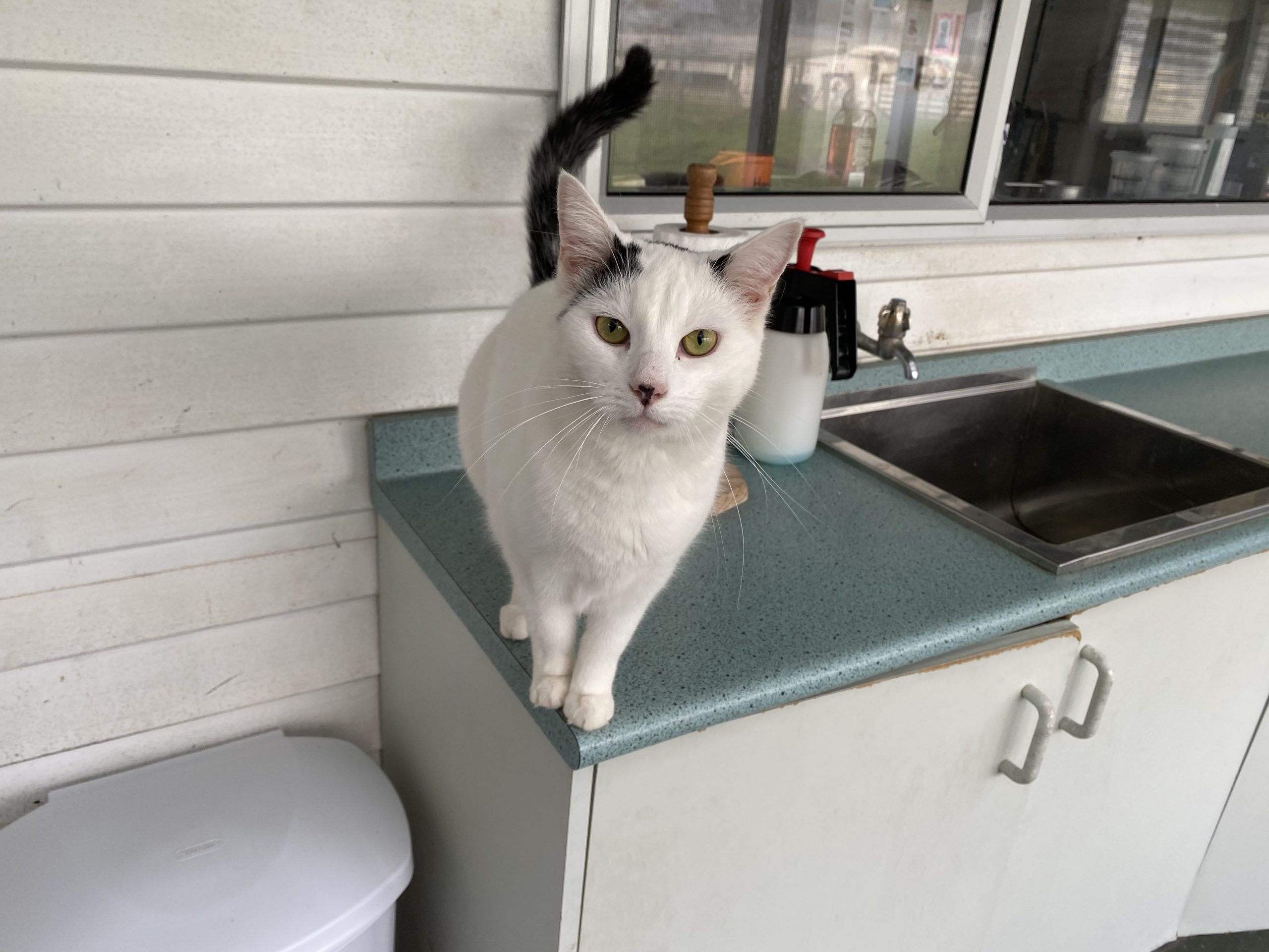 Cattery palmerston north